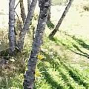 Trees At A Picnic Poster