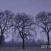 Trees At Night Poster