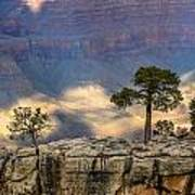 Trees At The Grand Canyon Poster