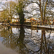 Trees Beside The Wintry Rolleston Pond Poster