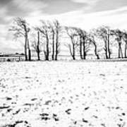 Trees In Snow Scotland Iv Poster
