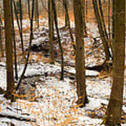 Trees In The Forest In Winter Brown And Orange Leaves Poster