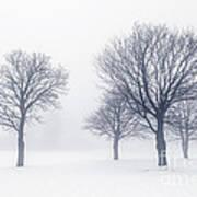 Trees In Winter Fog Poster by Elena Elisseeva
