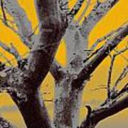 Winter Trees In Yellow Gray Mist 1 Poster