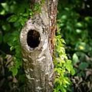 Tree's Mandala Poster