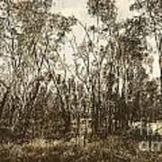 Trees Of Ashburn Poster