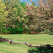 Trees On A Field, Davidson River Poster
