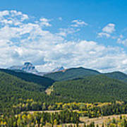 Trees On Canadian Rockies Along Route Poster