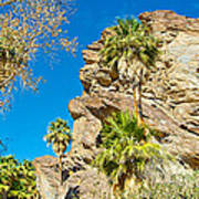 Trees On South Side Of Andreas Canyon In Indian Canyons-ca Poster