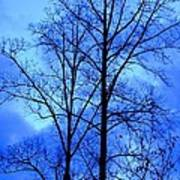 Trees So Tall In Winter Poster