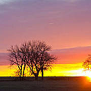 Trees Watching The Sunrise Panorama View Poster
