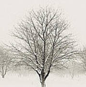 Treeternity Poster