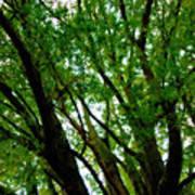 Treetops 2 Poster