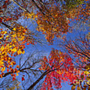 Treetops In Fall Forest Poster