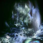 Tridacna Clams 3 Poster