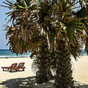 Trincomalee Palms Poster