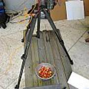 Tripod And Cherries On Floor Poster