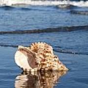 Triton Seashell Poster