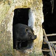 Troglodyte Pig Poster