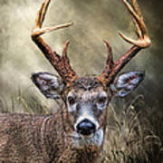 Trophy 10 Point Buck Poster