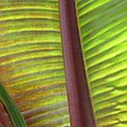 Tropical Banana Leaf Abstract Poster