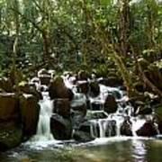 Tropical Falls Poster
