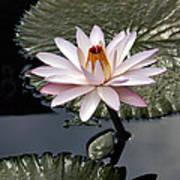 Tropical Floral Elegance Poster
