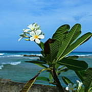 Tropical Flowers Poster
