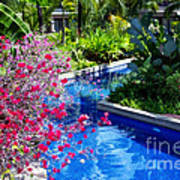 Tropical Garden Around Pool Poster