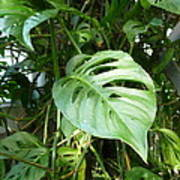 Tropical Green Foliage Poster