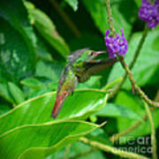 Tropical Hummingbird Poster