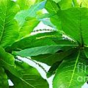 Tropical Noni Leaves Poster