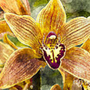 Tropical Orchid Poster