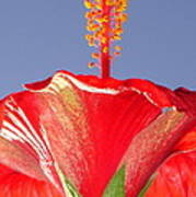 Tropical Red Hibiscus Flower Against Blue Sky  Poster
