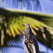 Tropical Woodpecker Poster