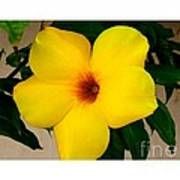 Tropical Yellow Blossom Poster