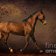 Trotting Into The Night Poster