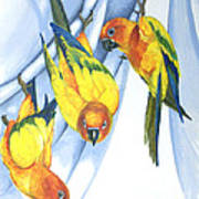 Trouble - Sun Conure Trio Poster