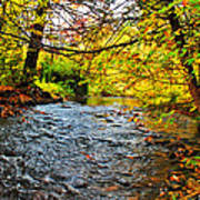 Trout Stream Poster
