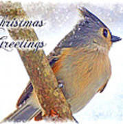 Tufted Titmouse Christmas Card Poster