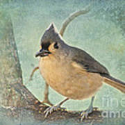 Tufted Titmouse IIi Poster