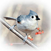 Tufted Titmouse Love  Poster