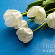 Tulip Flowers Over Blue Poster
