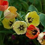 Tulip Parade Poster