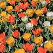 Tulip Stretch Poster