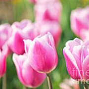 Tulip Time Poster by Angela Doelling AD DESIGN Photo and PhotoArt