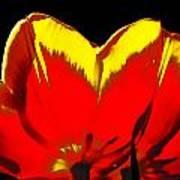 Tulip Underside Poster