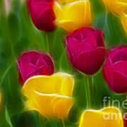 Tulips-6768-fractal Poster