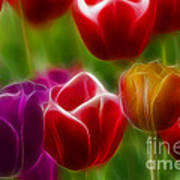 Tulips-7022-fractal Poster