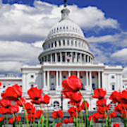 Tulips Bloom In Front Of The Capitol Poster